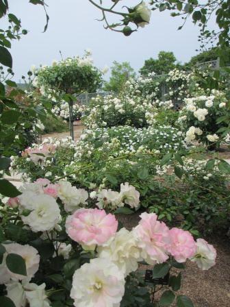 満開の花フェスタ記念公園へ行ってきました_a0243064_18501736.jpg