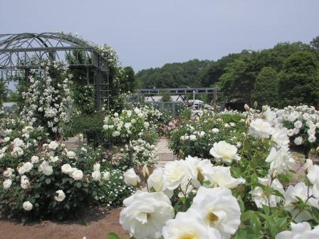 満開の花フェスタ記念公園へ行ってきました_a0243064_18503045.jpg