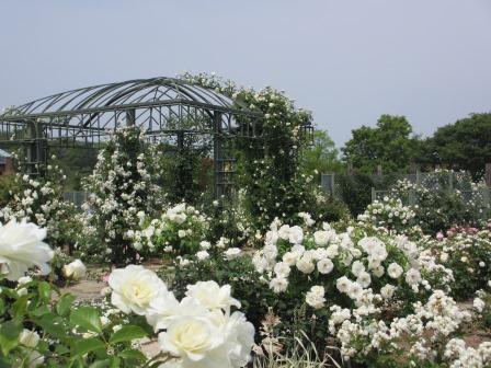 満開の花フェスタ記念公園へ行ってきました_a0243064_18504809.jpg