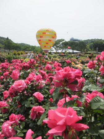 満開の花フェスタ記念公園へ行ってきました_a0243064_18564404.jpg