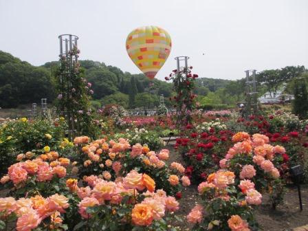 満開の花フェスタ記念公園へ行ってきました_a0243064_18565637.jpg