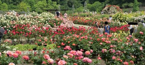 満開の花フェスタ記念公園へ行ってきました_a0243064_18575733.jpg