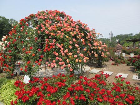 満開の花フェスタ記念公園へ行ってきました_a0243064_18582562.jpg