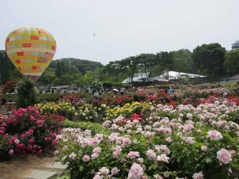 満開の花フェスタ記念公園へ行ってきました_a0243064_19001778.jpg