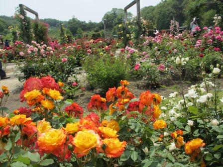 満開の花フェスタ記念公園へ行ってきました_a0243064_19023708.jpg
