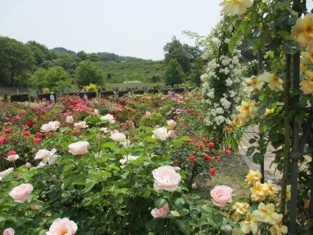 満開の花フェスタ記念公園へ行ってきました_a0243064_19025078.jpg