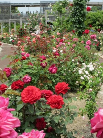 満開の花フェスタ記念公園へ行ってきました_a0243064_19032216.jpg