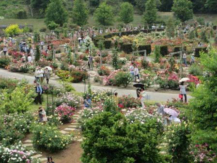 満開の花フェスタ記念公園へ行ってきました_a0243064_19034788.jpg