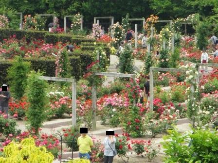 満開の花フェスタ記念公園へ行ってきました_a0243064_19035809.jpg