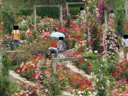 満開の花フェスタ記念公園へ行ってきました_a0243064_19041826.jpg