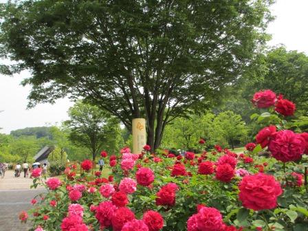 満開の花フェスタ記念公園へ行ってきました_a0243064_19070839.jpg
