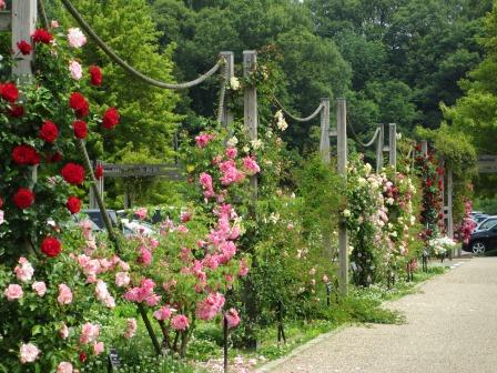 満開の花フェスタ記念公園へ行ってきました_a0243064_19071900.jpg