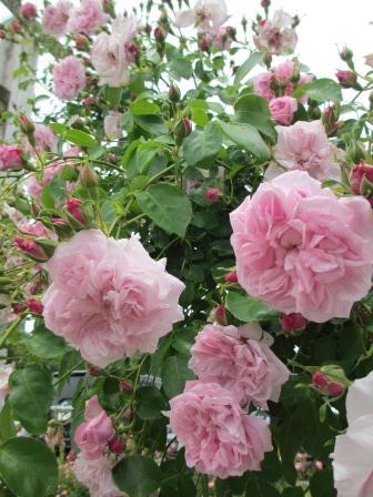 満開の花フェスタ記念公園へ行ってきました_a0243064_19073287.jpg