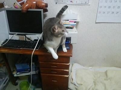 猫じゃらしで_b0112380_23231271.jpg