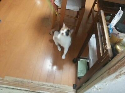 猫じゃらしで_b0112380_23232259.jpg