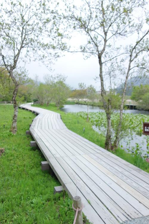 湿性花園_a0110787_2002693.jpg