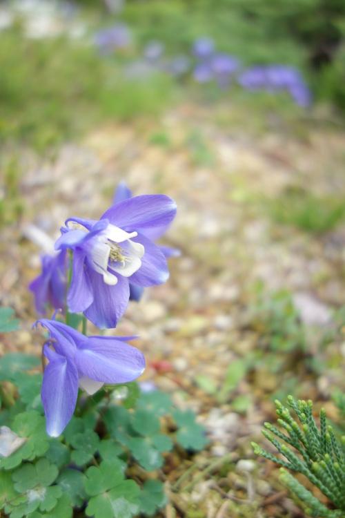 湿性花園_a0110787_20324010.jpg