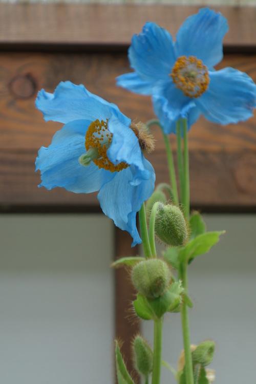 湿性花園_a0110787_20371695.jpg