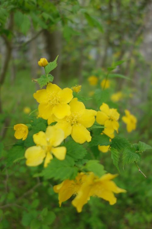 湿性花園_a0110787_204505.jpg