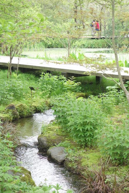 湿性花園_a0110787_2072337.jpg