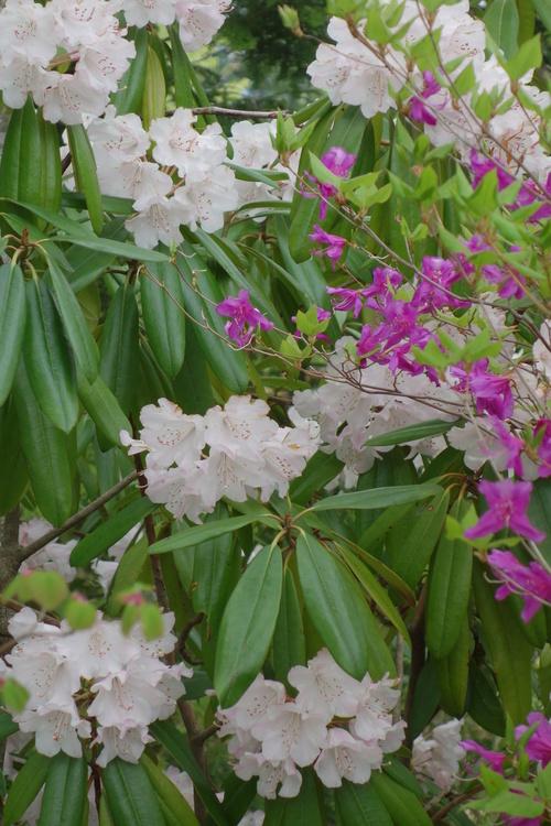 湿性花園_a0110787_2092891.jpg