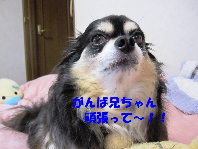 b0150088_16295498.jpg