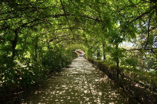 花のフィレンツェ散歩_f0106597_19464138.jpg