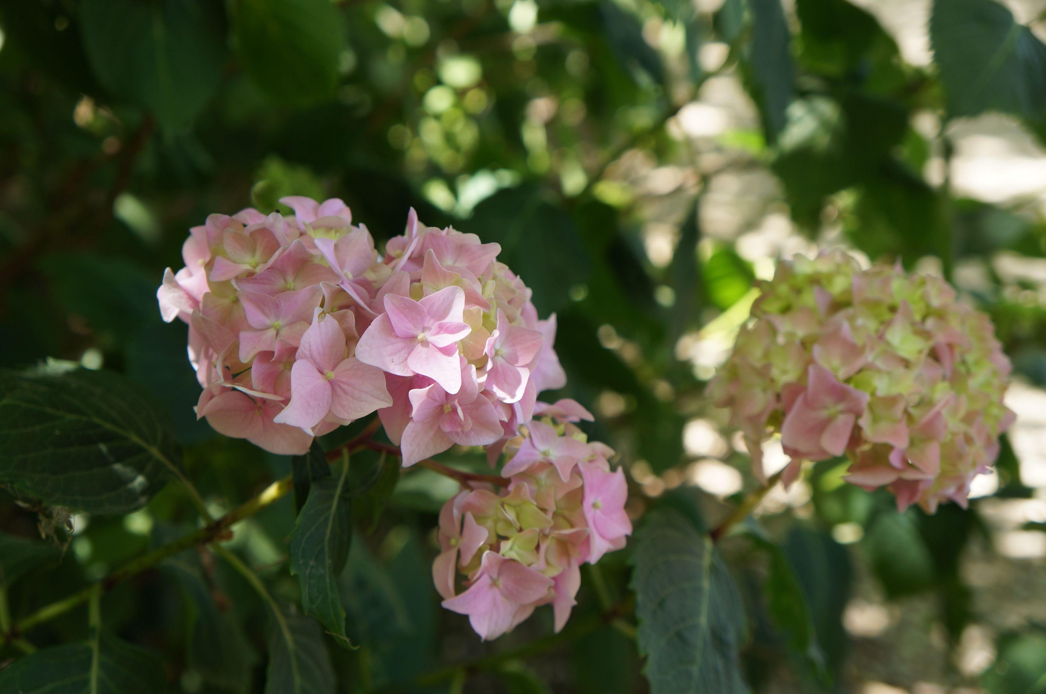 花のフィレンツェ散歩_f0106597_19480076.jpg