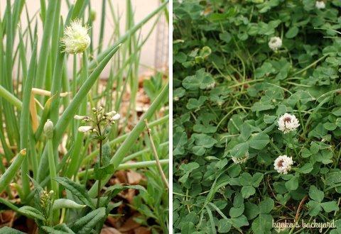花壇と菜園の様子と庭作業(5月下旬)_b0253205_2192329.jpg