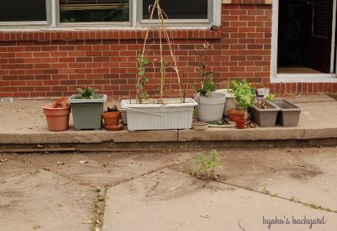 花壇と菜園の様子と庭作業(5月下旬)_b0253205_2203153.jpg