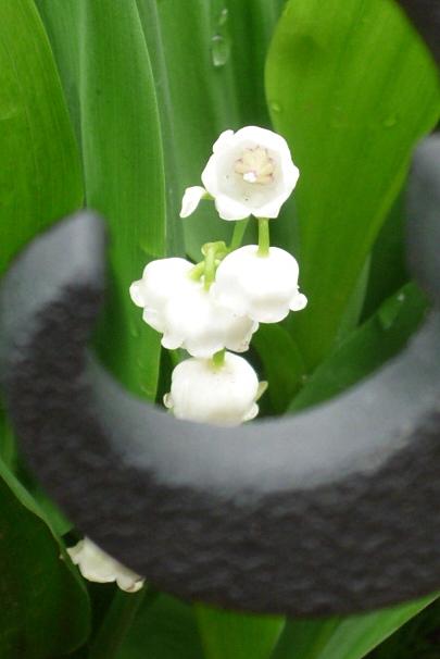 バラが咲く前に_a0214206_1155192.jpg