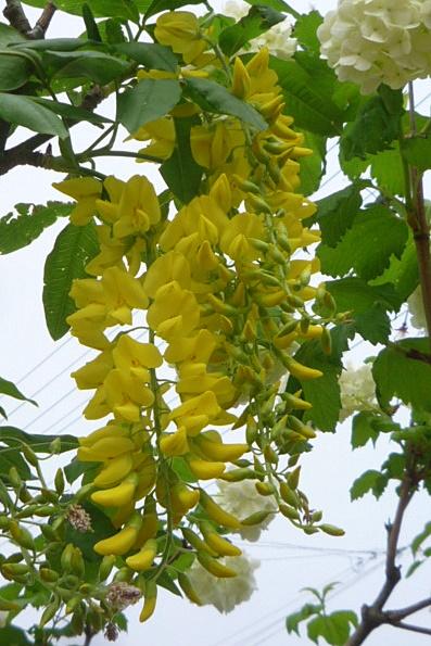 バラが咲く前に_a0214206_117513.jpg