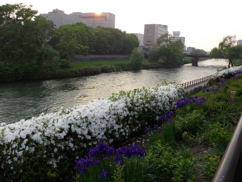 花の盛岡_c0025115_01250207.jpg