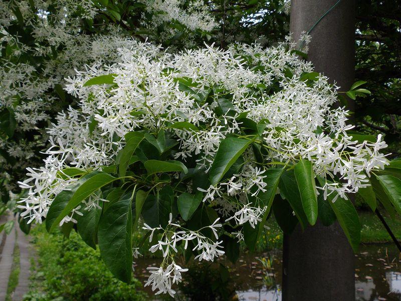 花の盛岡_c0025115_0425088.jpg