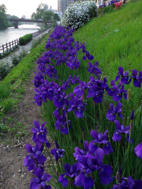 花の盛岡_c0025115_049422.jpg