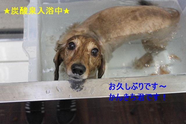 b0130018_2111264.jpg