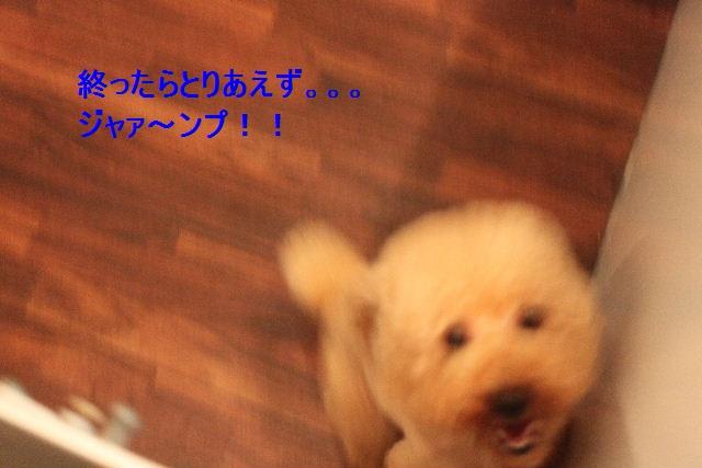 b0130018_2213160.jpg