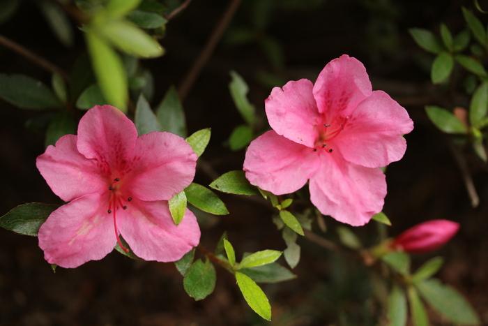 初夏の花たち_d0150720_1433380.jpg