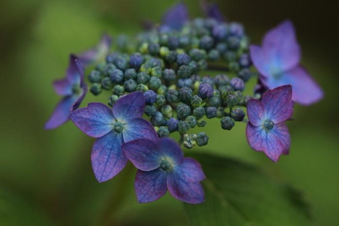 初夏の花たち_d0150720_1434027.jpg