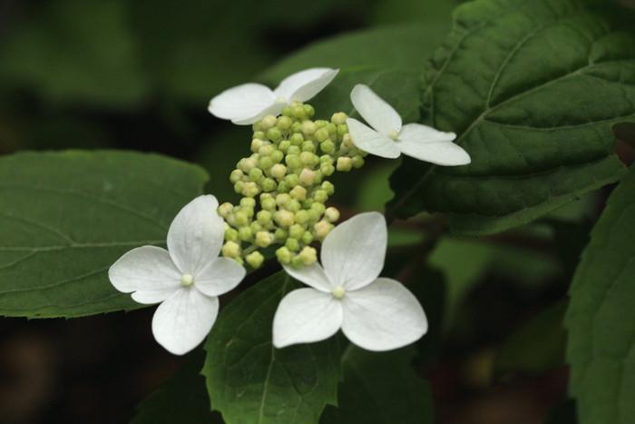 初夏の花たち_d0150720_14362279.jpg