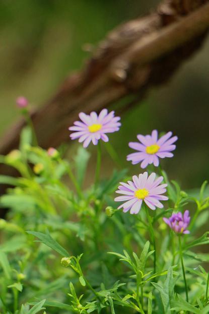 初夏の花たち_d0150720_1438229.jpg