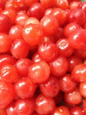 収穫。_b0135325_1453839.jpg