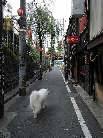大お散歩ダイジェスト_c0062832_644175.jpg