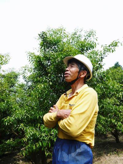 香り高き柚子(ゆず) 満開の柚子の花が咲き誇っていました!その2_a0254656_18191926.jpg