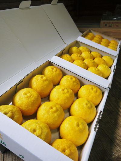 香り高き柚子(ゆず) 満開の柚子の花が咲き誇っていました!その2_a0254656_1911590.jpg