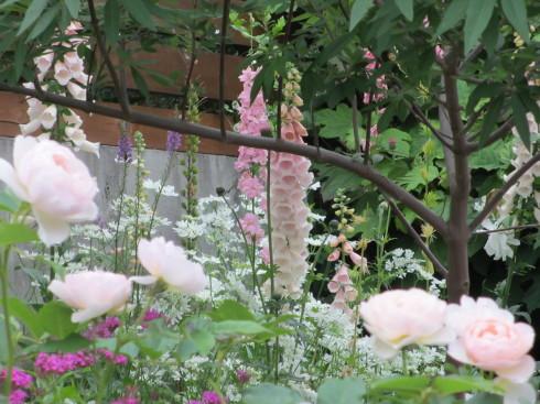 雨降り前の庭のお花たち_a0243064_19553251.jpg