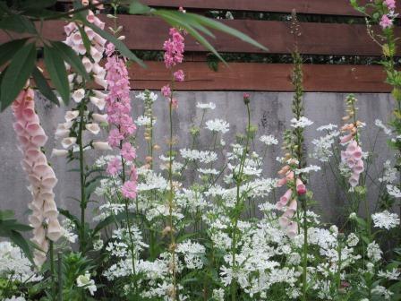 雨降り前の庭のお花たち_a0243064_19554626.jpg