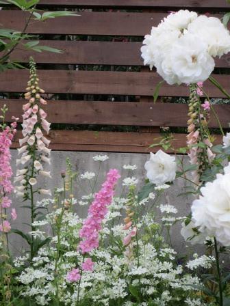 雨降り前の庭のお花たち_a0243064_19560072.jpg