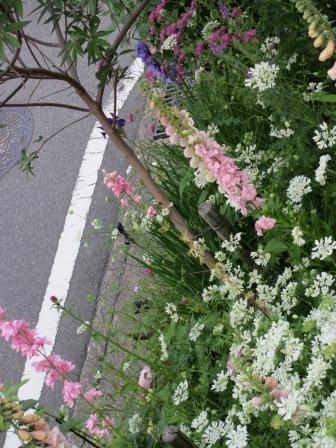 雨降り前の庭のお花たち_a0243064_19561218.jpg