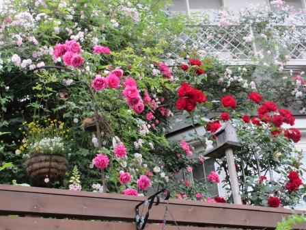 雨降り前の庭のお花たち_a0243064_19585154.jpg